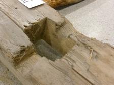 To av beinparene med originale bein (ett bein er tydelig skiftet ut) har dype spor etter det jeg tolker som kilen. Er sporet laget med hensikt for styring av kilen? Er det kun slitasje? Foto: Dino Makridis